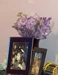 20p flowers